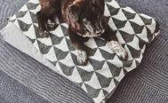 MiaCara Cielo Dog Blanket in size S