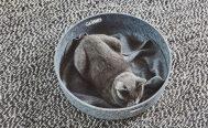 MiaCara Unica Cat Blanket - Danish Design Co Singapore