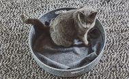 MiaCara Unica Cat Blanket in Pebble