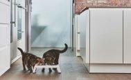 MiaCara Desco Cat Feeder - Danish Design Co Singapore