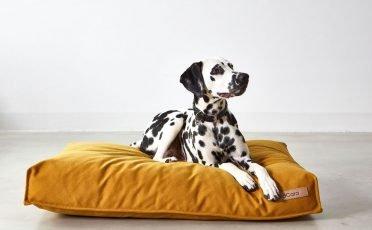 MiaCara Stella Dog Cushion in size Large and in colour Saffron