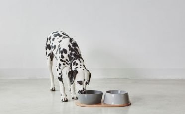 MiaCara Dog Bowl Set in Concrete