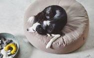 MiaCara Stella Dog Pouffe - Danish Design Co Singapore