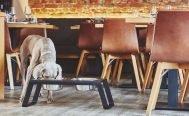 MiaCara Desco Dog Feeder - Danish Design Co Singapore