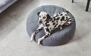 MiaCara Stella Dog Pouffe in size M/L and Slate colour
