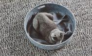 MiaCara Cestro Cat Basket - Danish Design Co Singapore