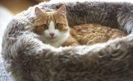 MiaCara Lana Cat Bed in grey - Danish Design Co Singapore