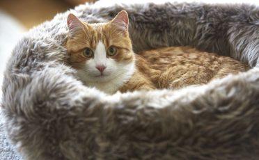 MiaCara Lana Cat Bed in grey